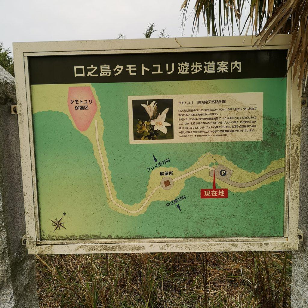 トカラ列島 口之島 タモトユリ展望台